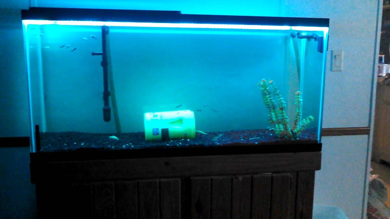 Fish Tank Lights Led