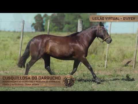 Lote 08 - Cusquillosa do Garrucho