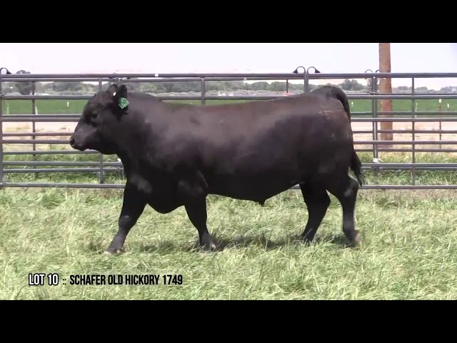 Mid Valley Bull Sale Lot 10