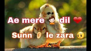 💕Sunn le zara  Whatsapp Love Status video💕