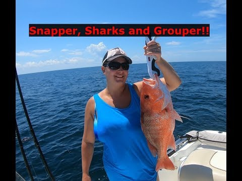 Repeat Snapper, Sharks, Grouper and more!! Catch Clean Cook