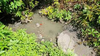 Не купайтесь в реке Смотрич!
