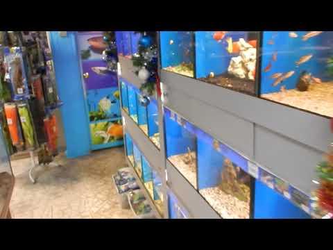 Aqua News №86. Зоо магазин Aqua Fish в Воронеже.