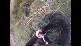 Luxembourg Fishing: Brown trout - 2014 season opening Luxembourg