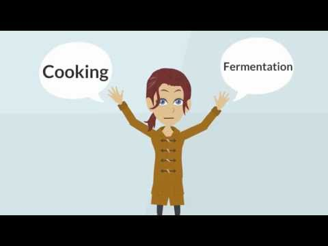 Milk Fermentation - Explained