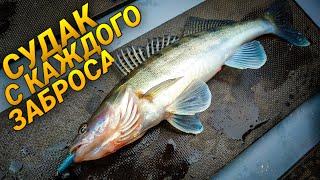ЭТОТ СИЛИКОН СДЕЛАЛ РЫБАЛКУ ЛОВЛЯ СУДАКА В НОЯБРЕ Рыбалка на спиннинг 2020