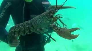 Подводные съемки лангуста. Корфу.(Ионическое море вокруг острова Корфу радует туристов. На морской прогулке водолаз показывает лангуста...., 2014-07-23T15:47:33.000Z)