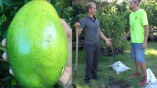 The Perfect Soil for Planting an Avocado Tree - Amazing!