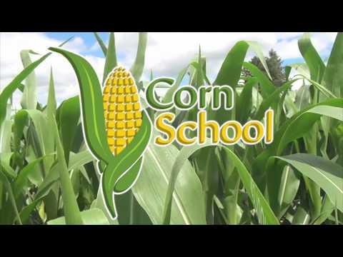 Corn School -  Maximizing Yield