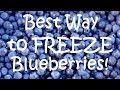BEST WAY TO FREEZE BLUEBERRIES