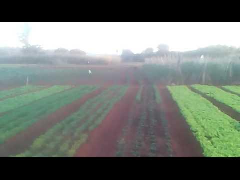 Cultivo de hortalizas de Nueva Italia Paraguay
