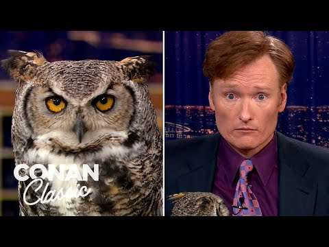 "Animal Expert Jarod Miller: Great Horned Owl & Crocodile - ""Late Night With Conan O'Brien"""