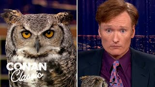Animal Expert Jarod Miller: Great Horned Owl & Crocodile  'Late Night With Conan O'Brien'