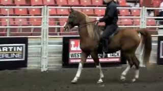 Arabian Horse Parade of Disciplines.m4v