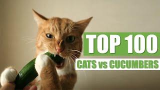 TOP 100 CATS vs CUCUMBERS