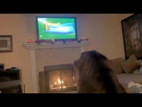 Boisterous Newfoundland nearly misses fireplace while pursuing cartoon cat