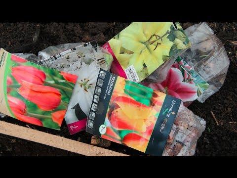 Купить луковичное растение в харькове недорого: большой выбор объявлений продам. Харьков. На ria. Com есть предложения продажа растение луковичное дешево в харькове. Комнатные растения, рассада и цветы.