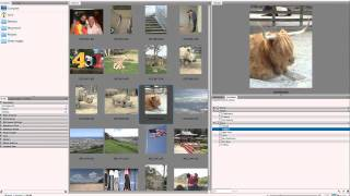 Photoshop Tutorial:  Using Keywords in Adobe Bridge