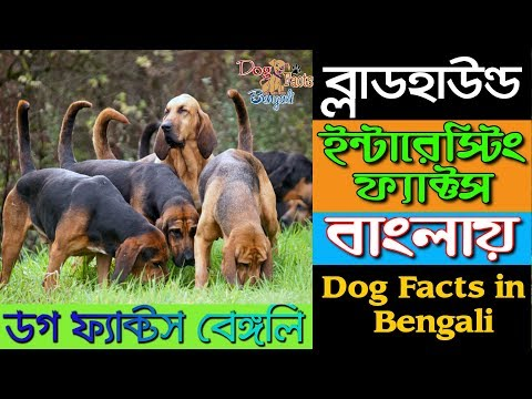 Bloodhound Dog Facts in Bengali | Sniffer Dog | Dog Facts Bengali