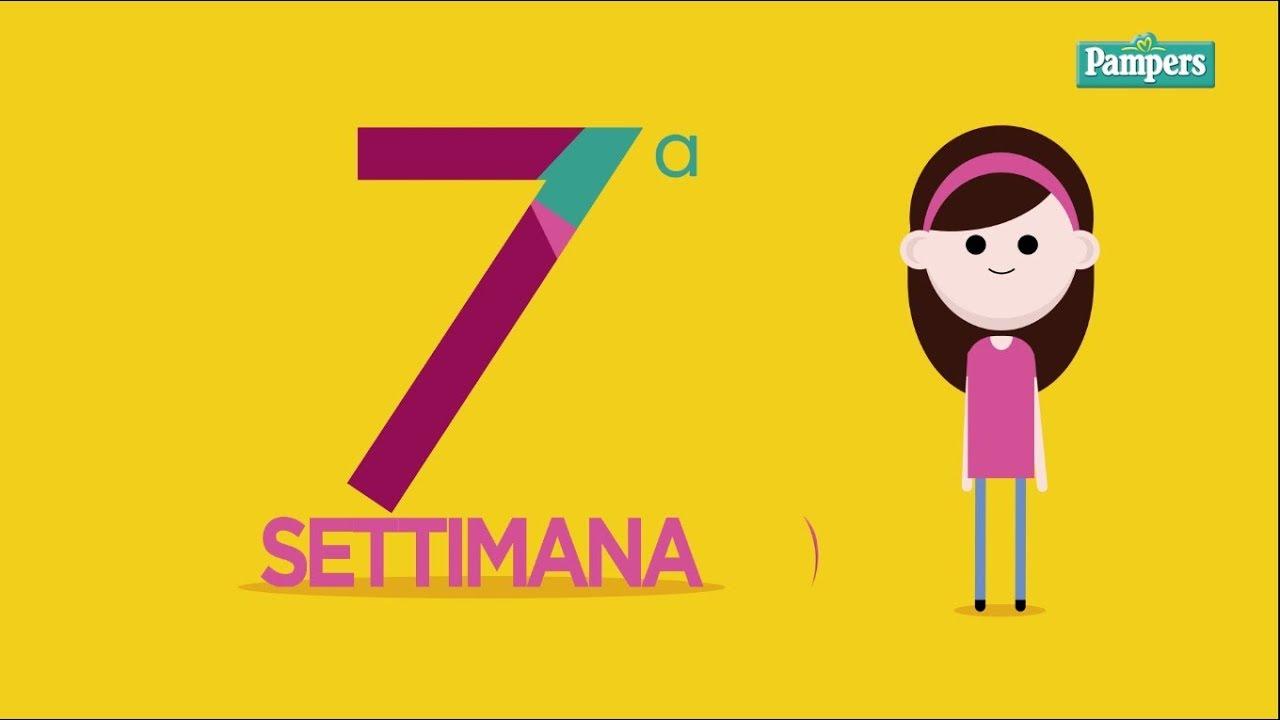 Calendario Settimane Gravidanza.7 Settimana Di Gravidanza