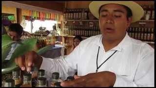 Feria del mezcal Oaxaca 2014