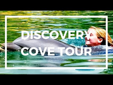 DISCOVERY COVE | SWIM WITH DOLPHINS | SWIM WITH FISH