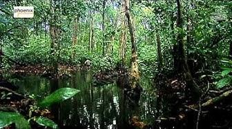 ᴴᴰ Dschungelfieber   Reise zu den Monstern in den Amazon Doku Deutsch