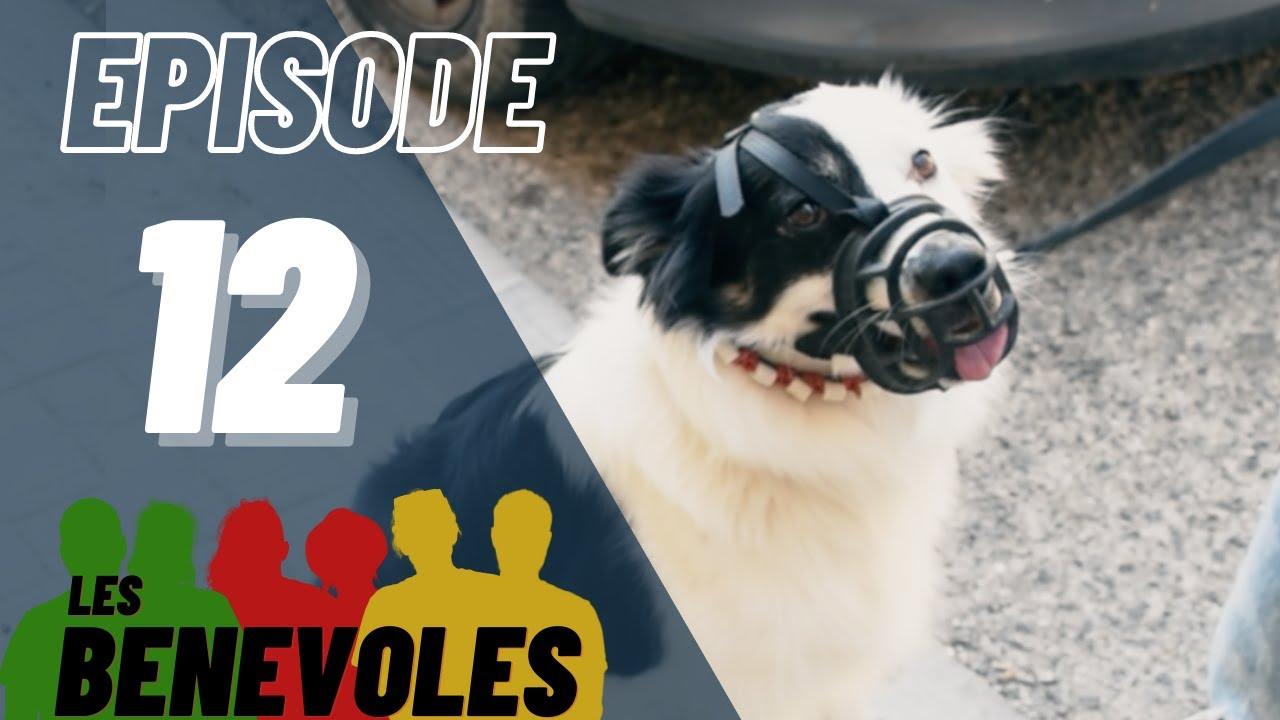 Les Bénévoles - Episode 12 - Esprit Dog