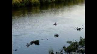 Паводок 2013 на речке Десна(Видео разлива на Десне. Снято с автомобильного моста возле Чернигова. Июнь 2013., 2013-06-05T20:22:14.000Z)