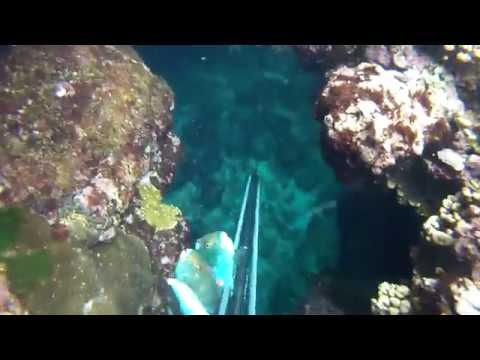 Guam spearfishing shallow work.