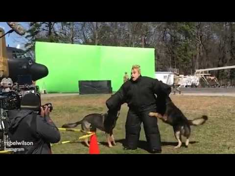 Rebel Wilson attacked by dogs on Pitch Perfect 3 set   Daily Mail Online