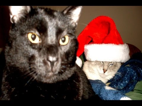 Talking Kitty Cat 24 - What's Christmas?