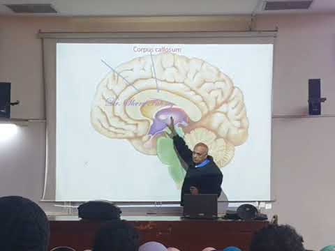 Blood supply of brain .  A.S😂.  Dr . Sherif fahmy