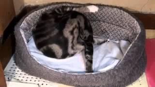 Кошка Спарта принесла 6 котят
