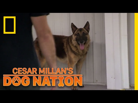 Approaching an Apprehensive Dog | Cesar Millan