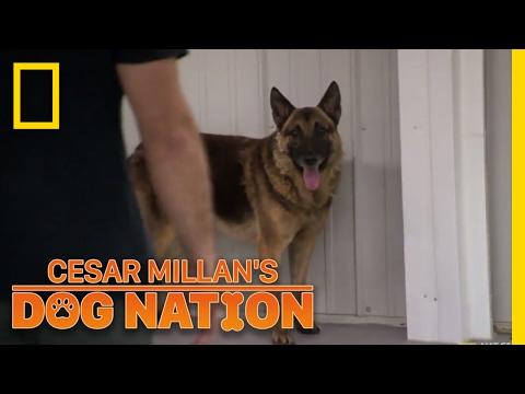 Approaching an Apprehensive Dog | Cesar Millan's Dog Nation
