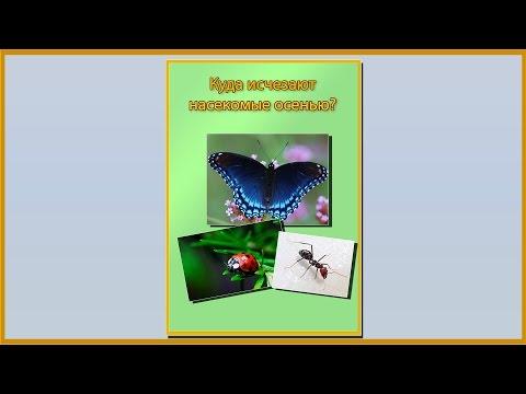 Смотреть онлайн Папка передвижка куда осенью исчезают насекомые