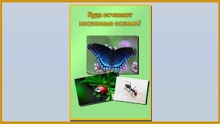 Папка передвижка куда осенью исчезают насекомые