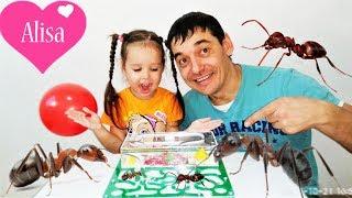 Алиса и МУРАВЬИНАЯ ФЕРМА с муравьями ЗАСЕЛЕНИЕ КАК УХАЖИВАТЬ Little baby Алиса