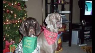 Dog Slide Show-my Weim Ferris And My Gsp-emmet