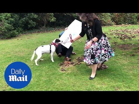 Lottery Winner's Dog Knocks Him Over During Photoshoot