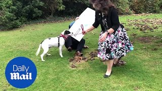 Lottery winner's dog knocks him over during photoshoot