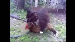 Clip sock chú mèo hiếp dâm gà mái. không biết ra con gì đây