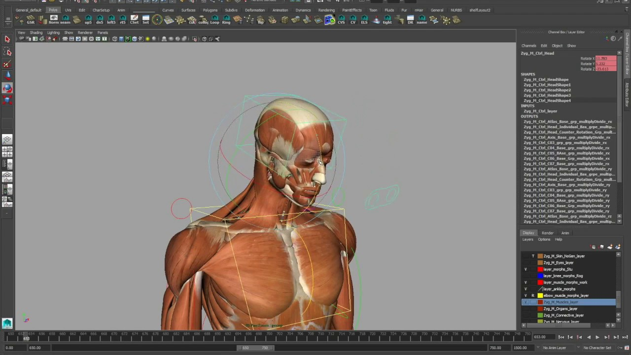 Complete Rigged 3d Model Hands Feet Muscles Skeleton Skin