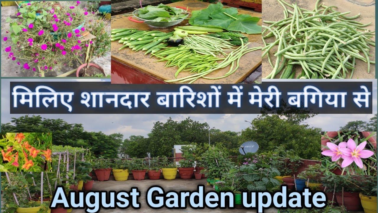 My Terrace Garden Tour/ Wonderful Harvesting 🥦🥕🌽in Mesmerizing 🌧Rains