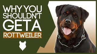 ROTTWEILER! 5 Reasons Why You SHOULD NOT Get a Rottie!