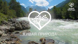 Кубань телеканал Живая природа
