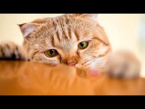 Ako imate mačka kradljivca, ovaj video će vas oduševiti!