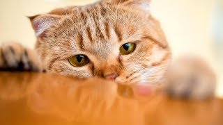 'Sneaky' Cats Stealing Stuff