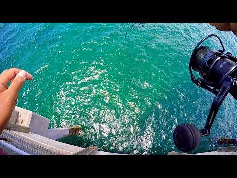 Snook Fishing Dania Beach Pier Summer 2017